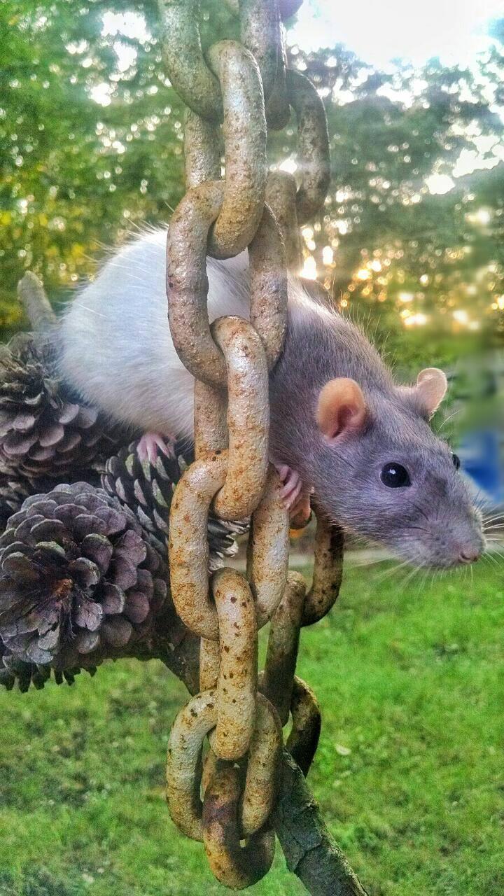 Meet Pasta on Chain