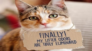 NEW Fresh Step Cat Litter Coupons – Save up to $6.75!