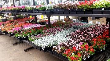 Hot Deals At Lowes Bogo Shake Amp Feed 1 Plants 2