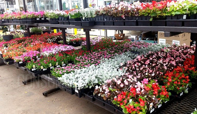 HOT Deals at Lowes: BOGO Shake u0026 Feed, $1 Plants, $2 Garden Soil u0026 More!