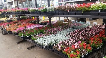 Home Depot : 12-pk Annuals Only $5 + 40% Off Bulbs w/FREE Shipping!