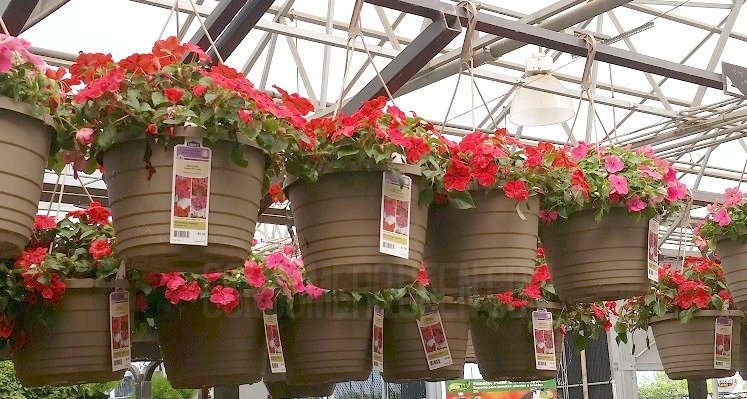 Hanging flower baskets 5 at lowes and home depot more pin mightylinksfo