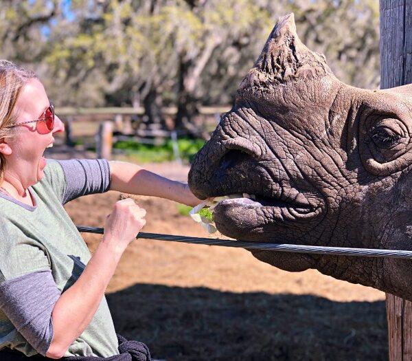 Feeding Rhino's