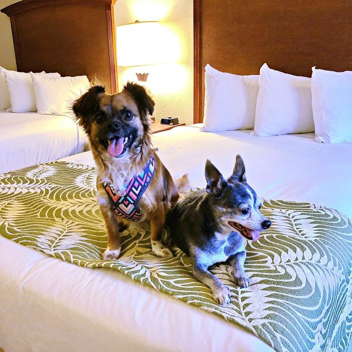 Rosen Inn Pointe Orlando Dog Friendly Orlando