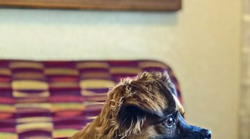 Petmate's Pet CFO Contest