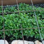 Starting Your Spring Garden Series- Week 2: Urban Gardening