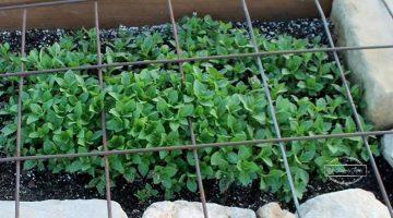 Starting Your Spring Garden Series- Week 2: Urban Gardening