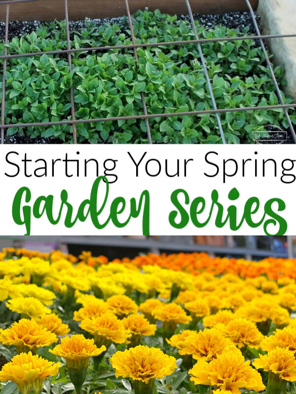 Starting Your Spring garden Series Week 1