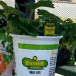 Bonnie Vegetable & Herb Plants $1.89 at Home Depot!