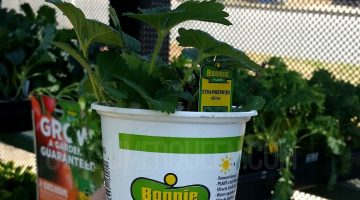 Bonnie Vegetable & Herb Plants $1.89 at Home Depot!