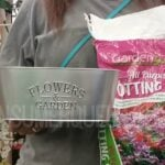 Window Box Flowers for Under $2.50 at Dollar Tree