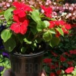 Home Depot Memorial Day Sale – Save BIG on Flowers & More!