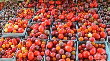 Starting Your Spring Garden Series- Week 4: Soil Vegetables