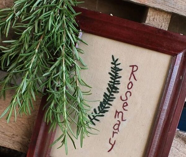 Starting Your Spring Garden Series- Week 3: Growing Rosemary