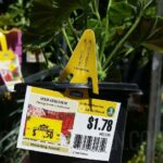 Annual Flowers as Low as 50¢ at Lowes  + More!