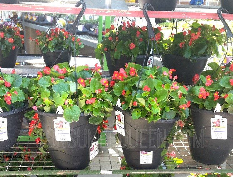 Home Depot Red White Blue Sale 5 Hanging Plants More