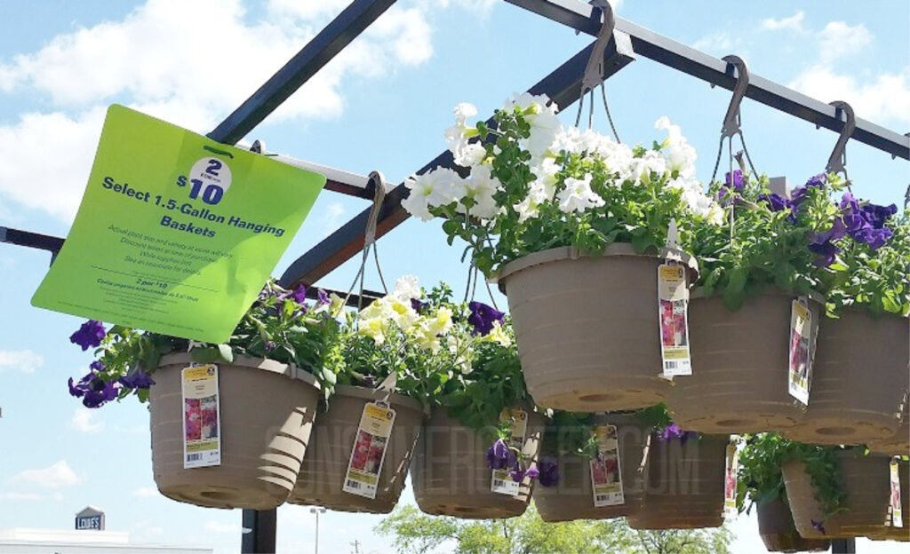 hanging flower baskets at lowes