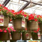 Hanging Flower Baskets 2/$10 ($5 Each) + More at Lowes
