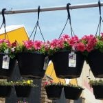 HOT Deals at Home Depot: Kingsford Charcoal, Plants, Mulch & More!