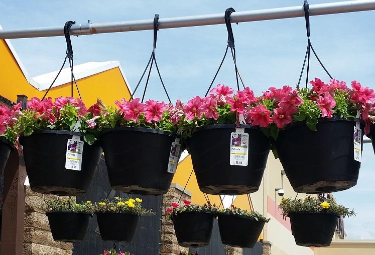 Home Depot Spring Black Friday Sale – $5 Hanging Baskets, $2 Mulch & More!