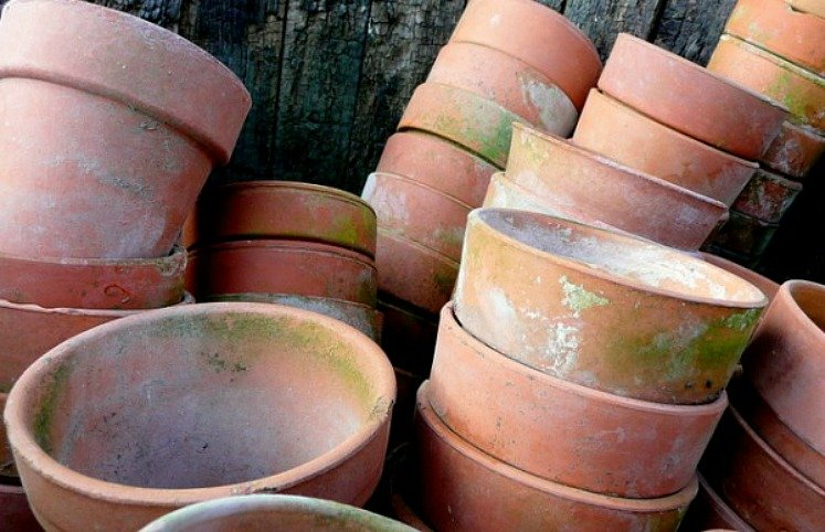 top 10 tips for gardening - clay pots