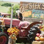 chesters pumpkin patch