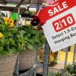 hanging flower baskets lowe's