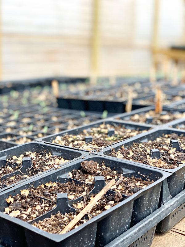 Gardening Mistakes -spring decor ideas