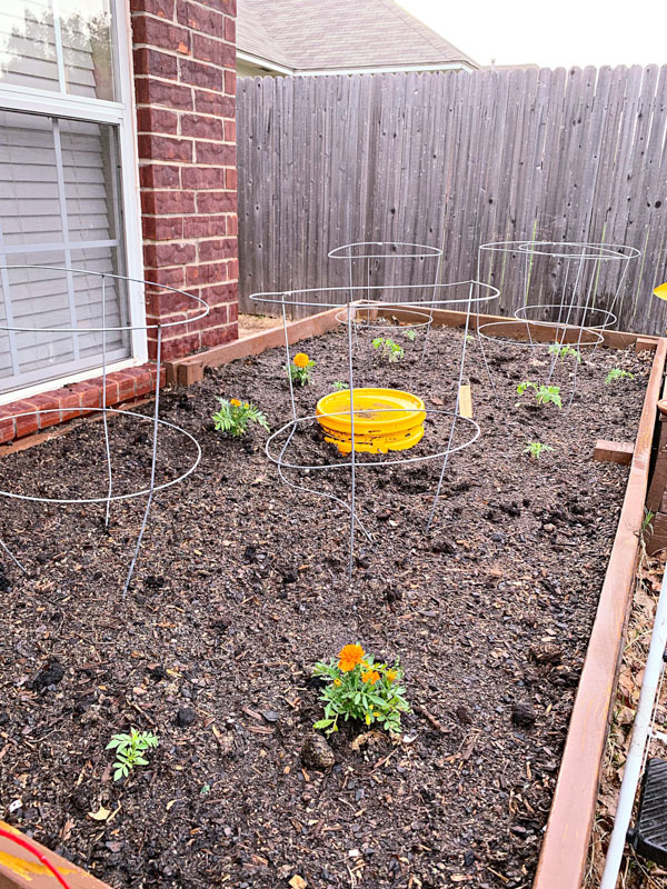 Improve Your Garden Tomato Plants