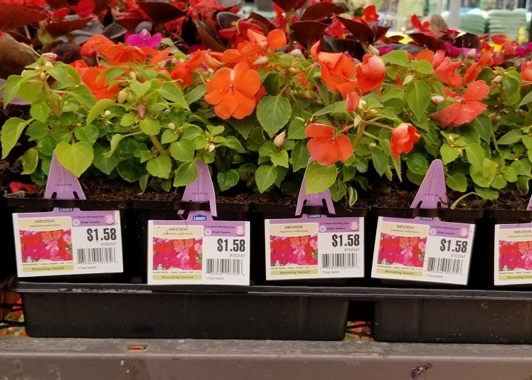 Spring Black Friday Sale at Lowe's- $2 Mulch, 25¢ Pavers, $2 Miracle-Gro & More!