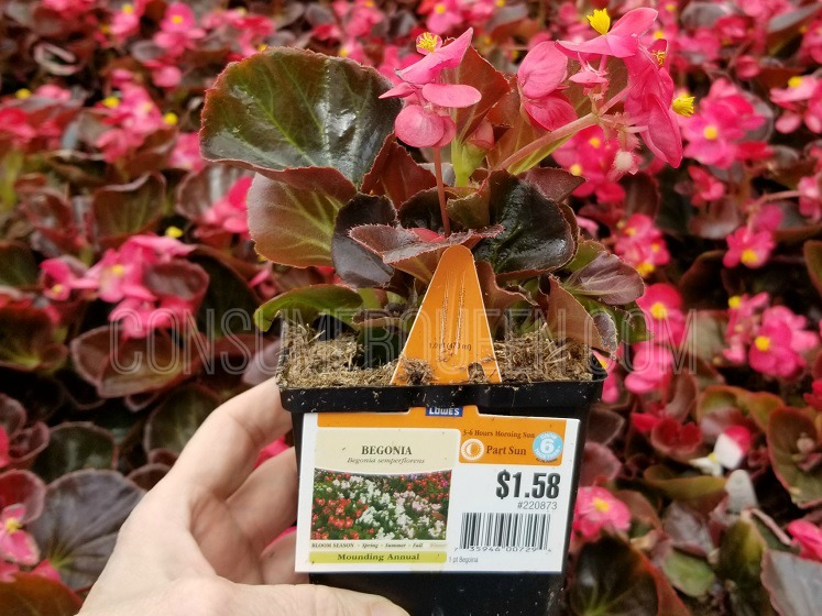 2 Day Sale Coming to Lowe's – 88¢ Flowers, Commander Totes & More