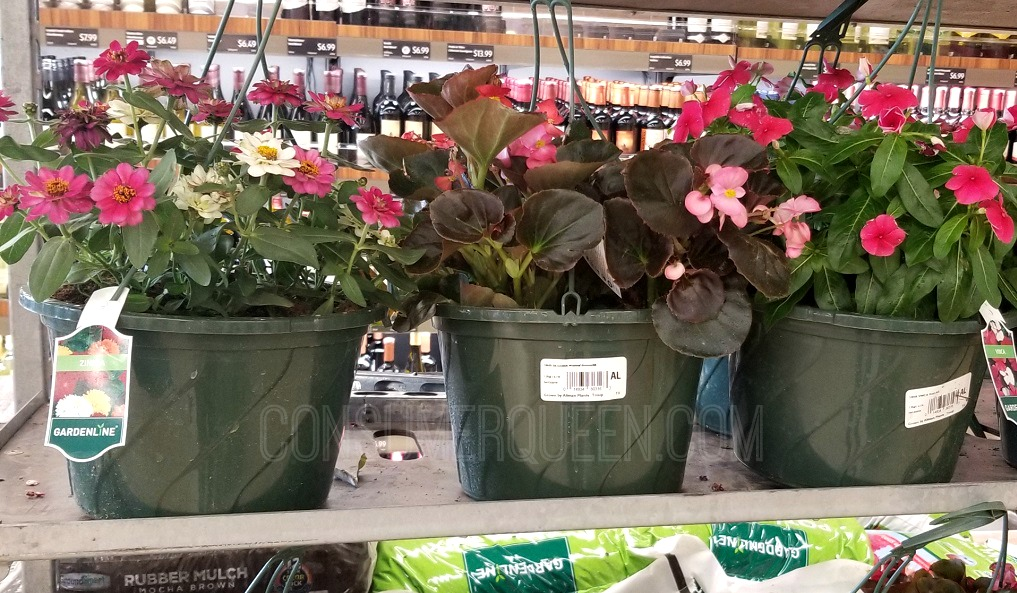 hanging flower pots at aldi