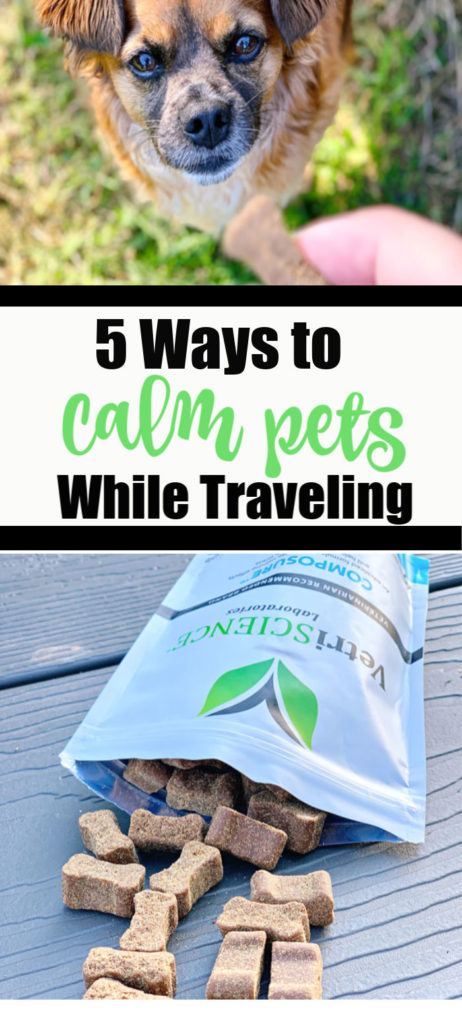 5 Ways to Calm Pets While Traveling