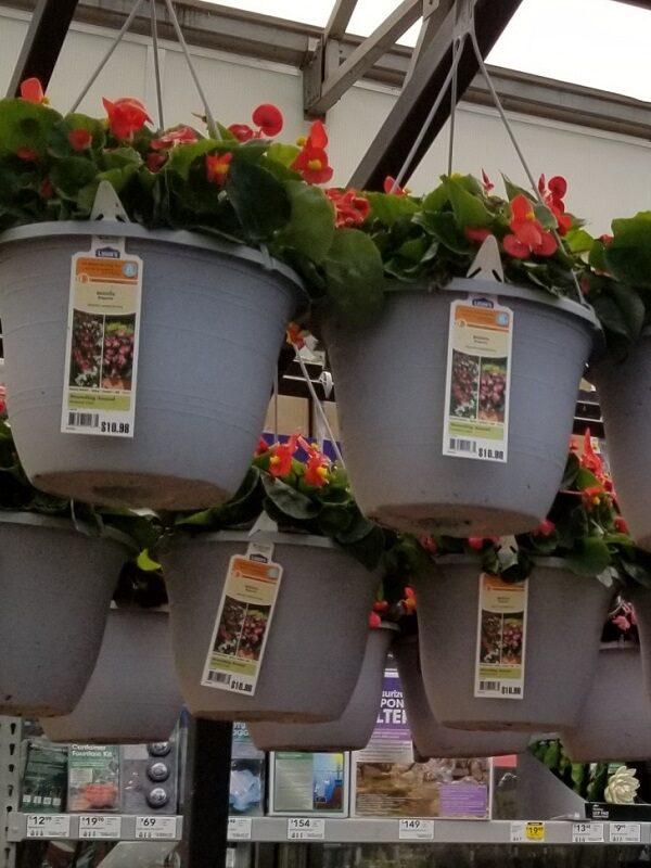 Lowes Springfest - hanging flower baskets