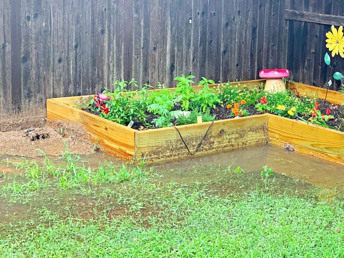 Muddy Garden