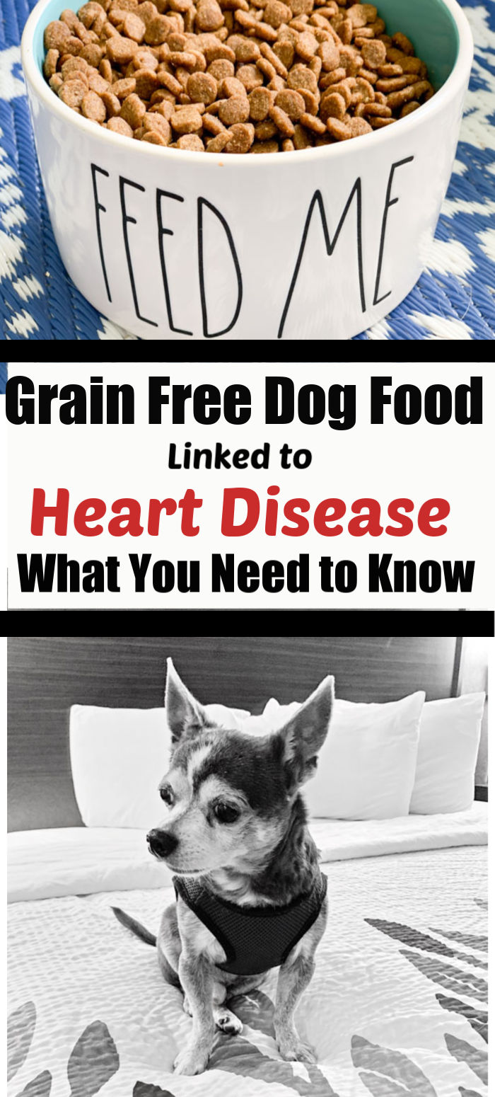 Grain Free Diets Lead to Heart Disease in Dogs