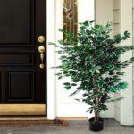 beautiful artificial ficus tree