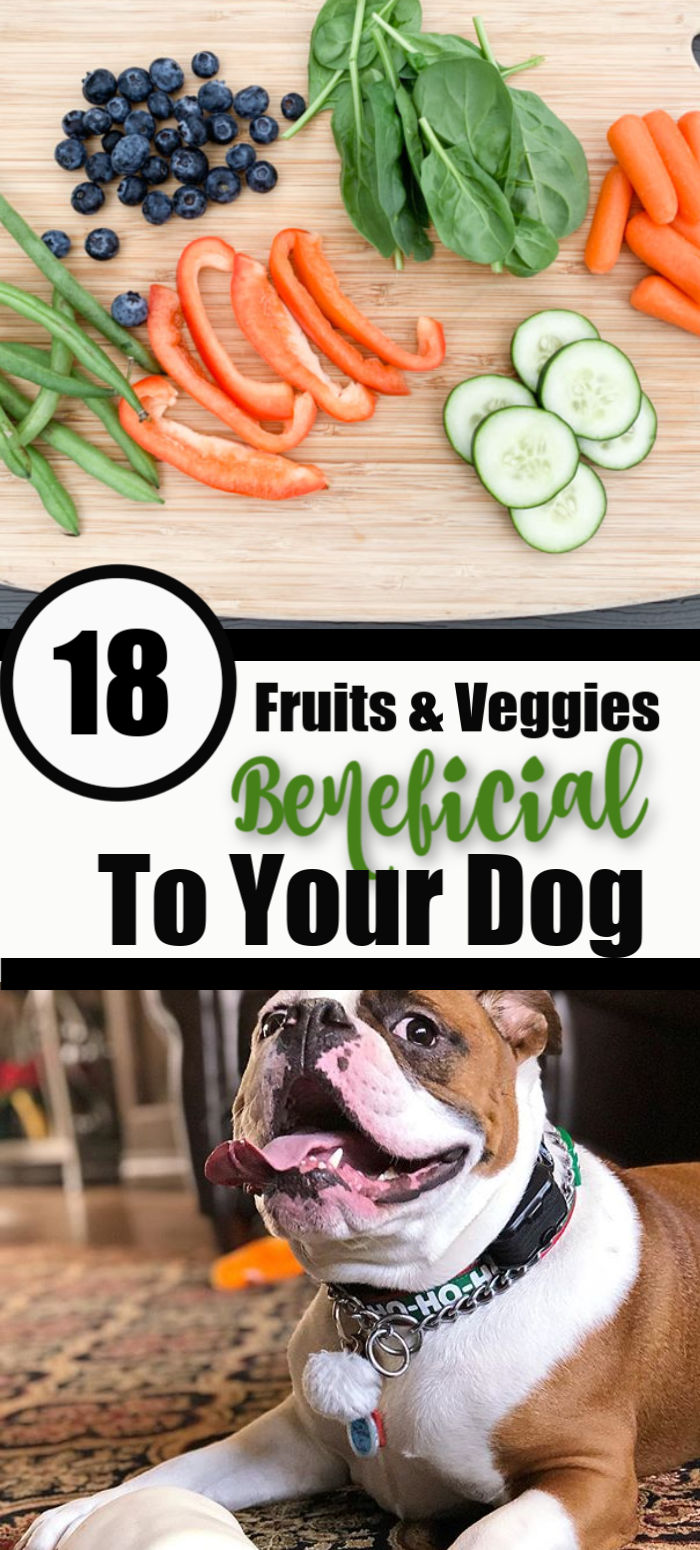 18 Fruits and Veggies That Are Beneficial For Your Dog