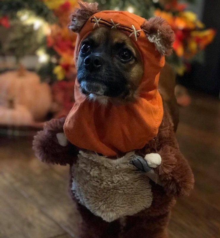 dog halloween costumes at Chewy
