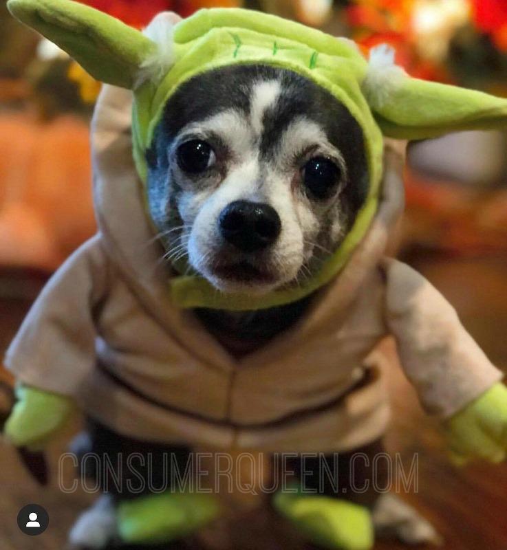 Dog in costume- Fun Halloween ideas