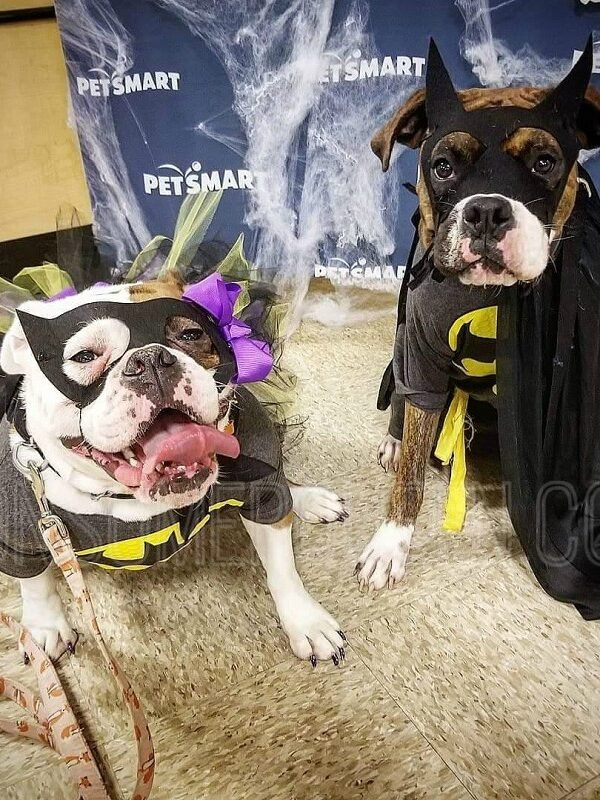 petsmart halloween party