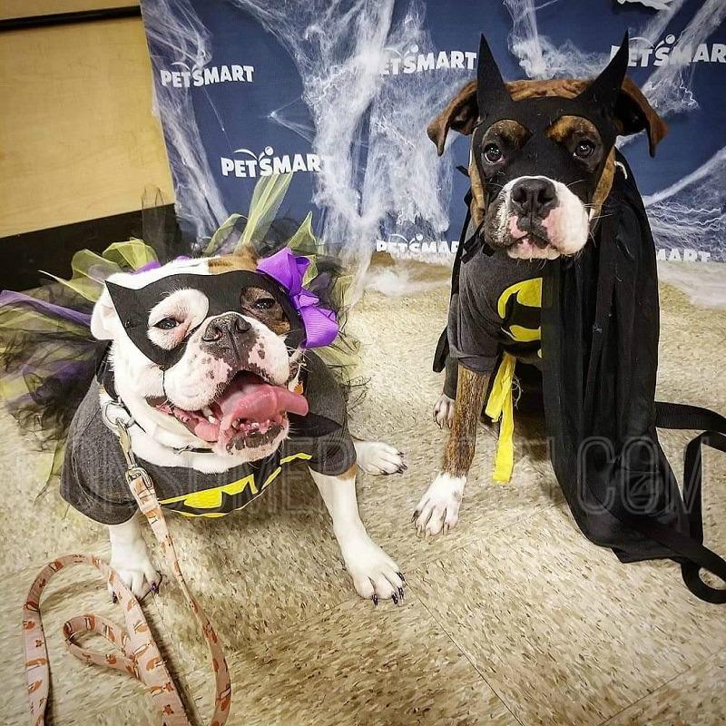 PetSmart Halloween Party Today!