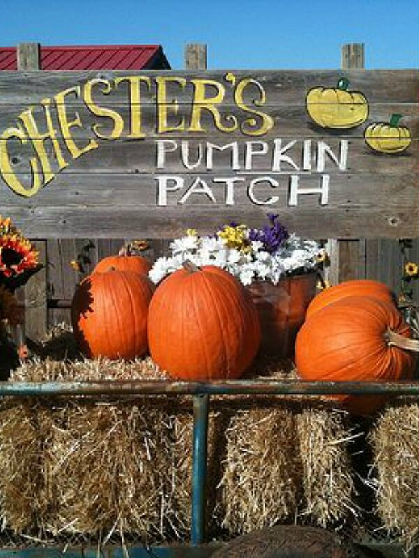 pumpkin patch at chesters