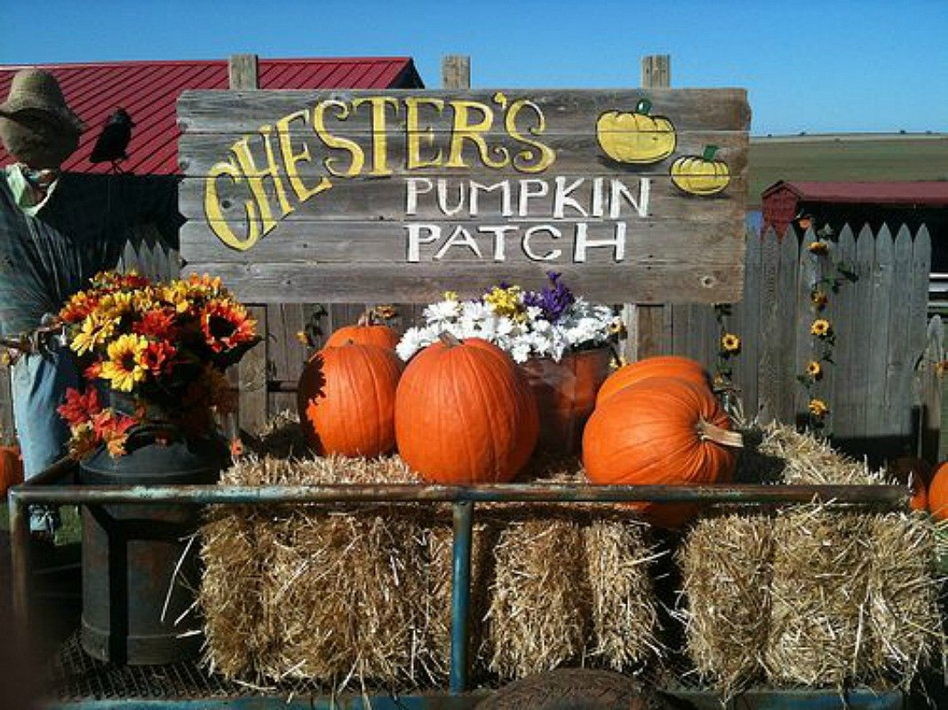 pumpkin patch at chesters - $10 Off any Groupon!