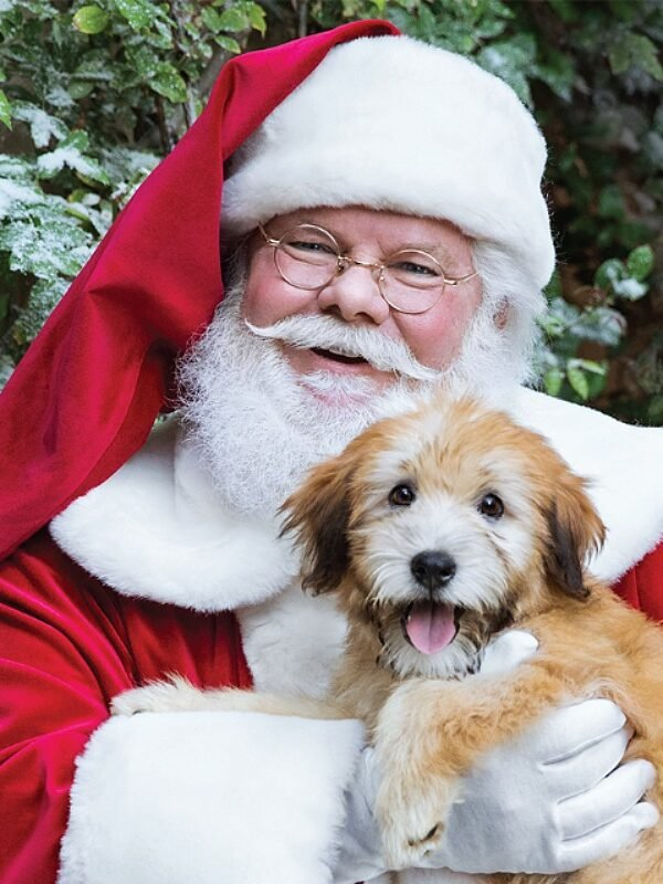 free photo with santa at petsmart