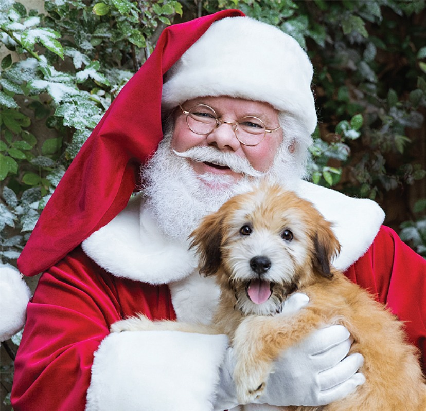FREE Photo With Santa at PetSmart This Weekend! *EXPIRED*