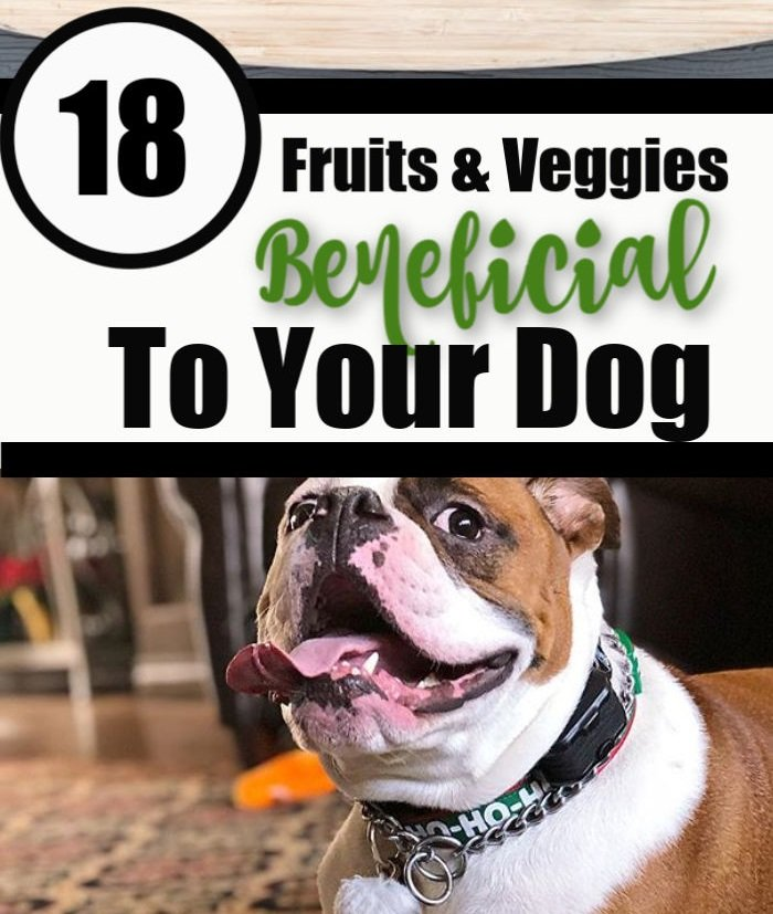 18 fruits & veggies beneficial to your dog
