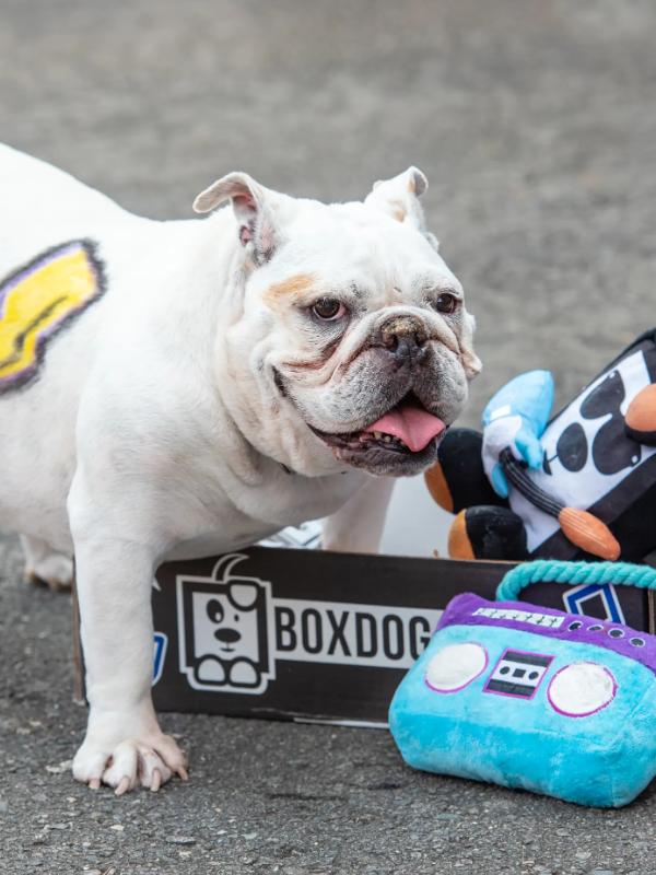 boxdog holiday box