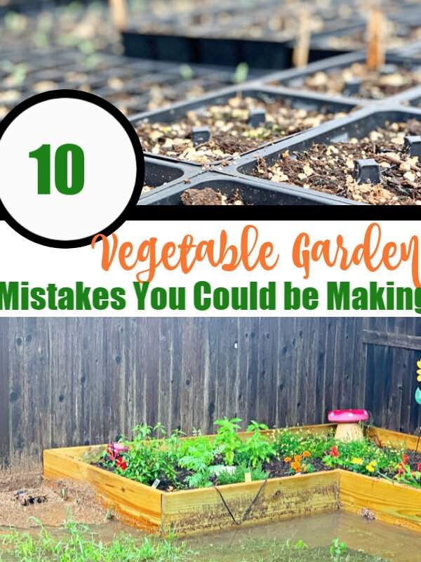 10 Vegetable Garden Mistakes