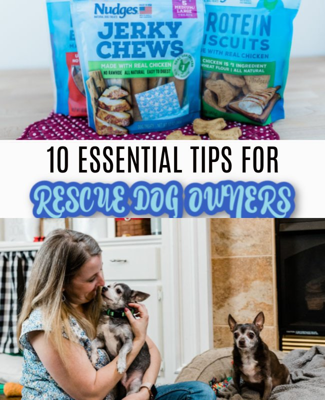 10 TIPS FOR RESCUE DOG OWNERS